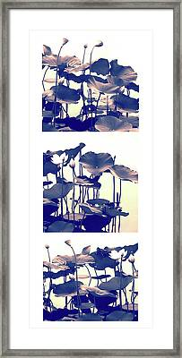 Dance Of The Lotus Triptych II Framed Print by Jessica Jenney