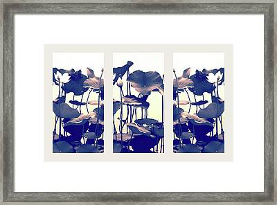 Dance Of The Lotus Triptych Framed Print by Jessica Jenney