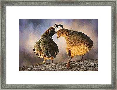 Dance Of The Quail Framed Print by Priscilla Burgers