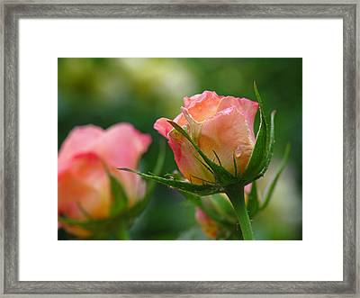 Dance Your Bud Off Framed Print by Juergen Roth