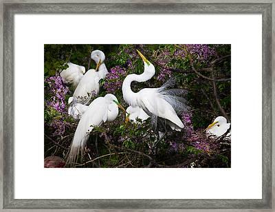 Dancing In Flowers - Great Egrets - Texas Framed Print by Ellie Teramoto