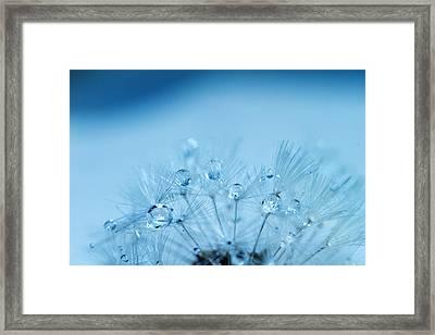 Dandelion Bouquet Framed Print by Rebecca Cozart