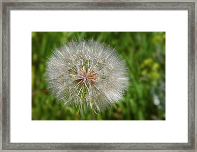 Dandelion Puff - The Summer Queen Framed Print by Christine Till