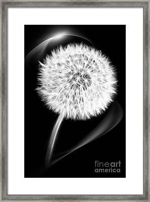 Dandelion Framed Print by VIAINA Visual Artist