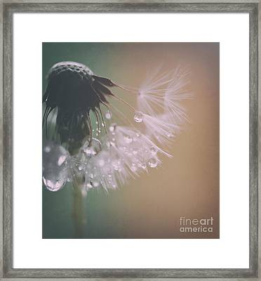 Dandelion With Pearls 3 Framed Print by SK Pfphotography