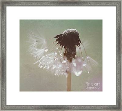 Dandelion With Pearls 4 Framed Print by SK Pfphotography