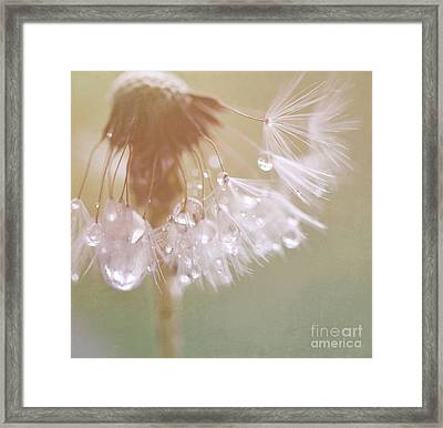 Dandelion With Pearls 5 Framed Print by SK Pfphotography