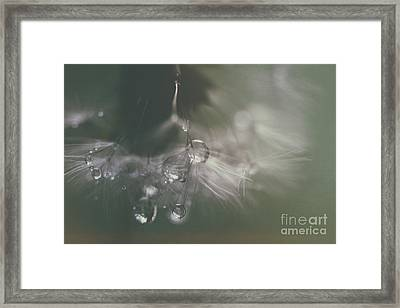 Dandelion With Pearls Framed Print by SK Pfphotography