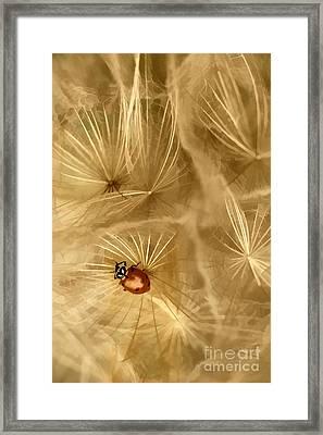 Dandelions Fairy Tales Iv Framed Print by Iris Greenwell