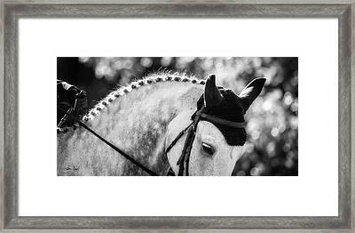Dapper Framed Print by Joan Davis