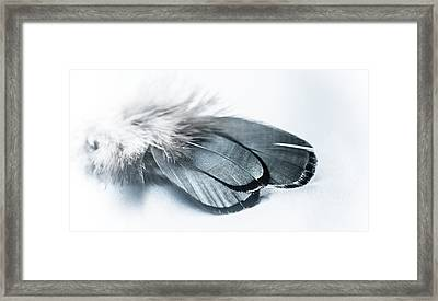 Dare To Fly Framed Print by Maggie Terlecki