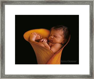 Calla Lily Framed Print featuring the photograph Darion In Calla Lily by Anne Geddes