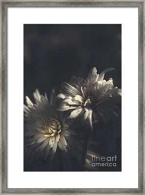 Dark Artistic Flower Fine Art. Dawn Of Spring Framed Print by Jorgo Photography - Wall Art Gallery
