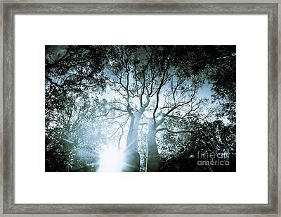 Dark Blue Spooky Trees Framed Print by Jorgo Photography - Wall Art Gallery