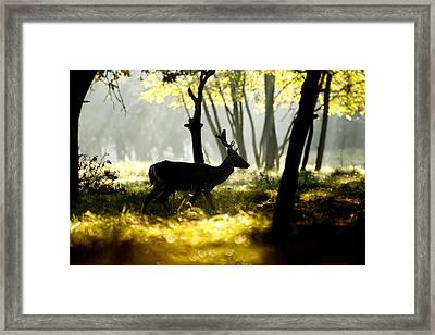 Dark Deer In Illuminated Forest Framed Print by Roeselien Raimond