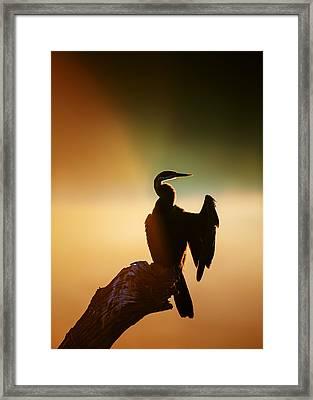 Darter Bird With Misty Sunrise Framed Print by Johan Swanepoel