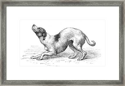 Darwins Humble Dog, Illustration, 1872 Framed Print by Wellcome Images