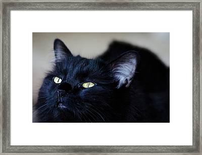Day Dreamer Framed Print by Camille Lopez