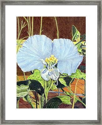 Day Flower Framed Print by Beverly Fuqua