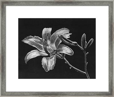 Day Lily Framed Print by Diane Cutter