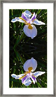 Day Lily Reflection Framed Print by Amy Vangsgard
