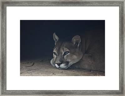 Daydreamer Framed Print by Vadim Levin