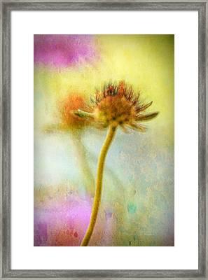 Daylight Breaks Through Framed Print by Bonnie Bruno