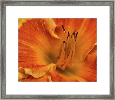 Daylily Close-up Framed Print by Sandy Keeton