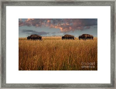 Days End Framed Print by Tamyra Ayles