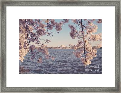 Dc Spring Framed Print by Emily Kay