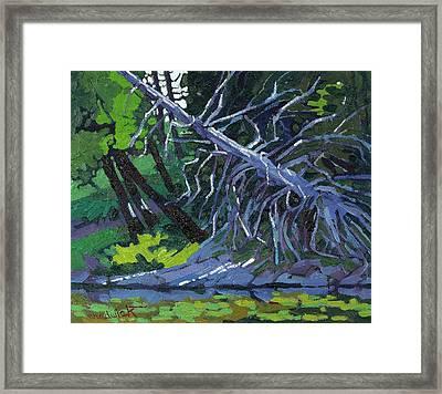 Dead Cedar Framed Print by Phil Chadwick