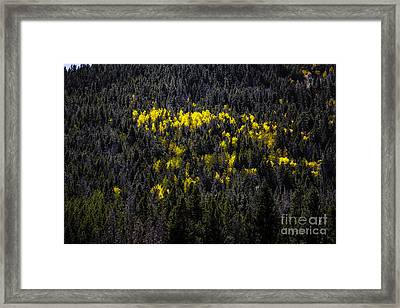 Yellow Fire Framed Print by Jon Burch Photography