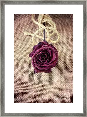 Dead Rose Framed Print by Carlos Caetano