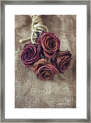 Dead Roses Framed Print by Carlos Caetano