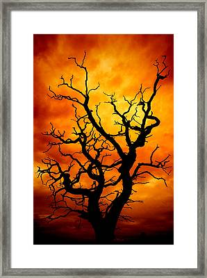 Dead Tree Framed Print by Meirion Matthias