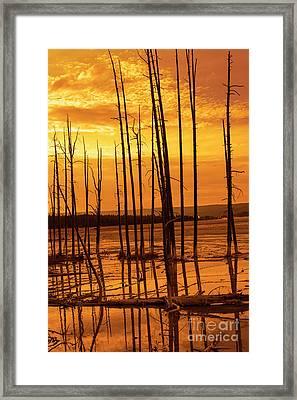 Dead Trees Framed Print by Juli Scalzi