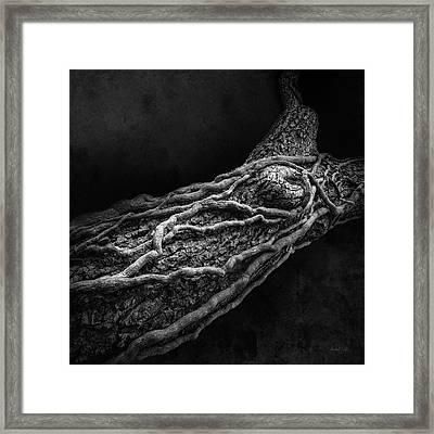 Dead Vine Embrace Framed Print by Michel Godts
