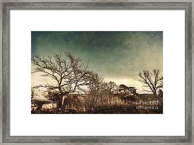 Dead Woodland Framed Print by Jorgo Photography - Wall Art Gallery
