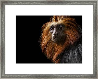 Debonair Framed Print by Paul Neville