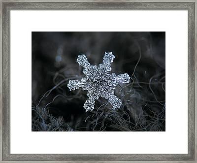 December 18 2015 - Snowflake 1 Framed Print by Alexey Kljatov