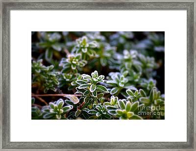December Morning Framed Print by Patti Whitten