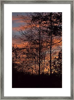 December Sunset In Frog Pond Woods Framed Print by Maria Suhr