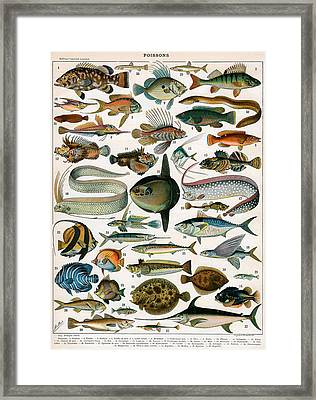 Decorative Print Of Poissons By Demoulin Framed Print by American School