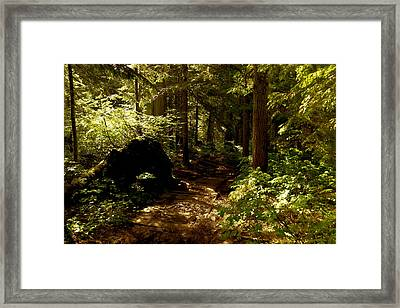 Deep Down The Trail Framed Print by Jeff Swan