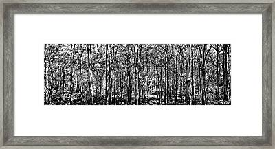 Deep Forest Bw Framed Print by Az Jackson