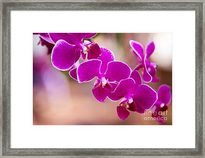 Deep Fuchsia Orchids  Framed Print by A New Focus Photography