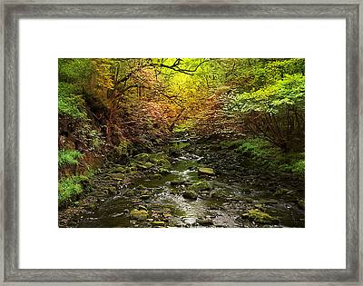 Deep In The Woods Framed Print by Svetlana Sewell