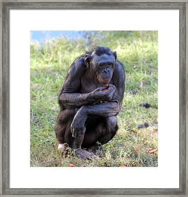 Deep In Thought Framed Print by Dana  Oliver