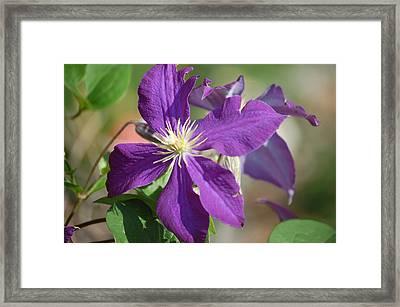 Deep Purple Framed Print by Heather Chaput