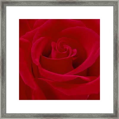 Deep Red Rose Framed Print by Mike McGlothlen